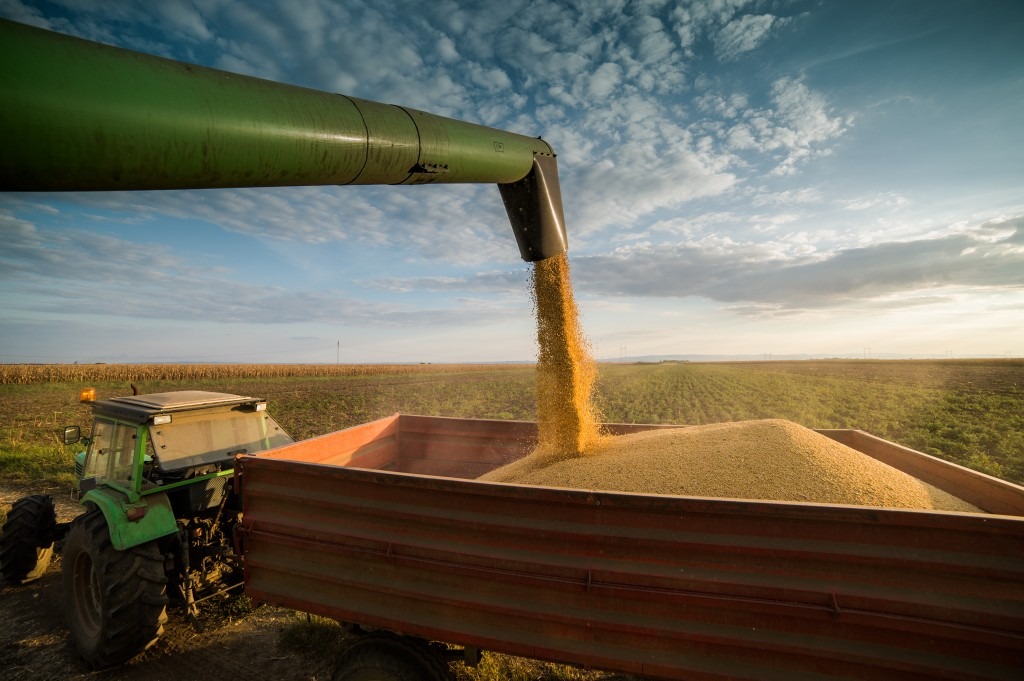Pouring soy bean